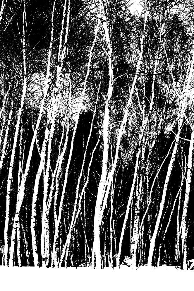 Birch tree relief