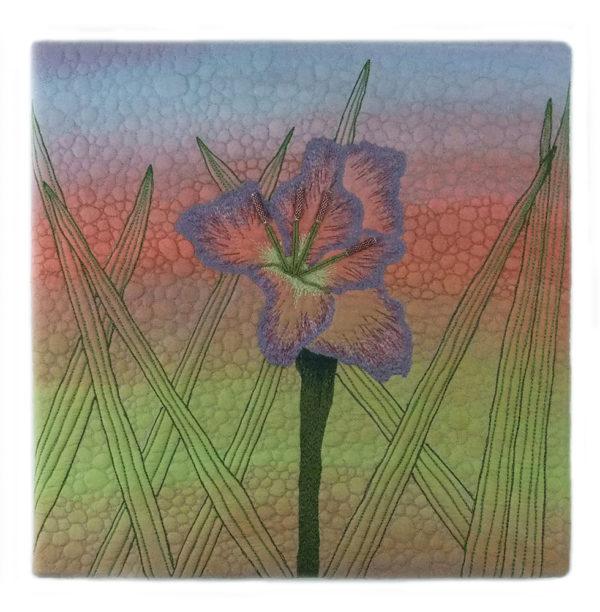 gladiolus-all-web